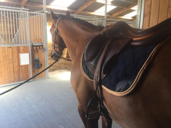 tapis horse pilot 3D