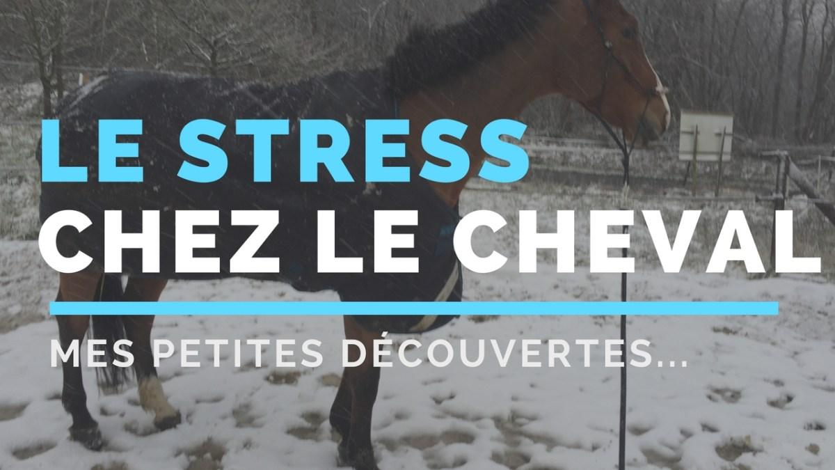 Avoir un cheval stressé : mes petites découvertes !