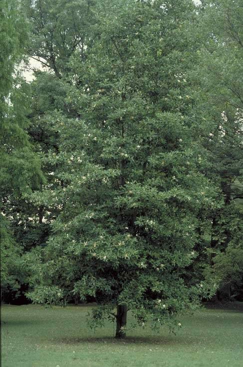 Tree Landscape Design