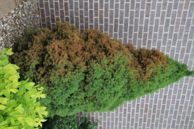 Trees  Shrubs  Wisconsin Horticulture