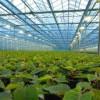 871251_greenhouse_1