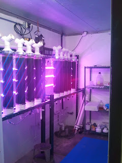 Algae Production with LEDs