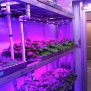 Green pod growth chamber