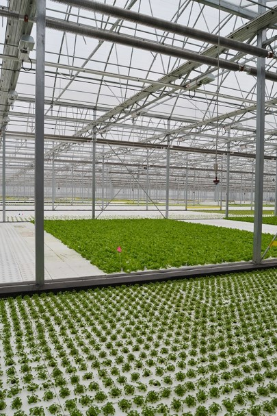 Gene Giacomelli, director of the University of Arizona's Controlled Environment Agriculture Center, said since there is less insect and disease pressure in a greenhouse than in an open field, there is a less need for control procedures.