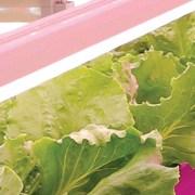 GE-arize-LED-lights-horticultural