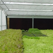 Schaefer-wet-wall-evaporative-cooling-system-greenhouse