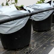 plantlogic-cooling-skirt-2