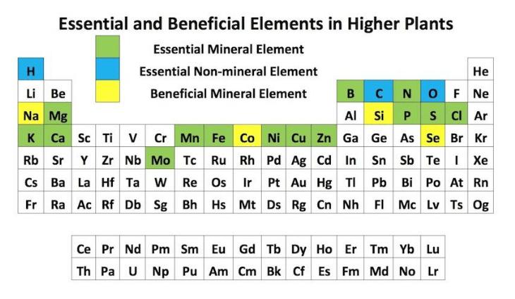 Essential Plant Elements – Hort Americas