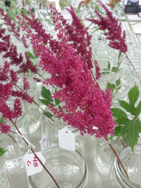Postharvest study with astilbe