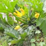 HorticultureNS-Gallery29