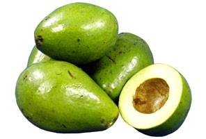 abacate geada