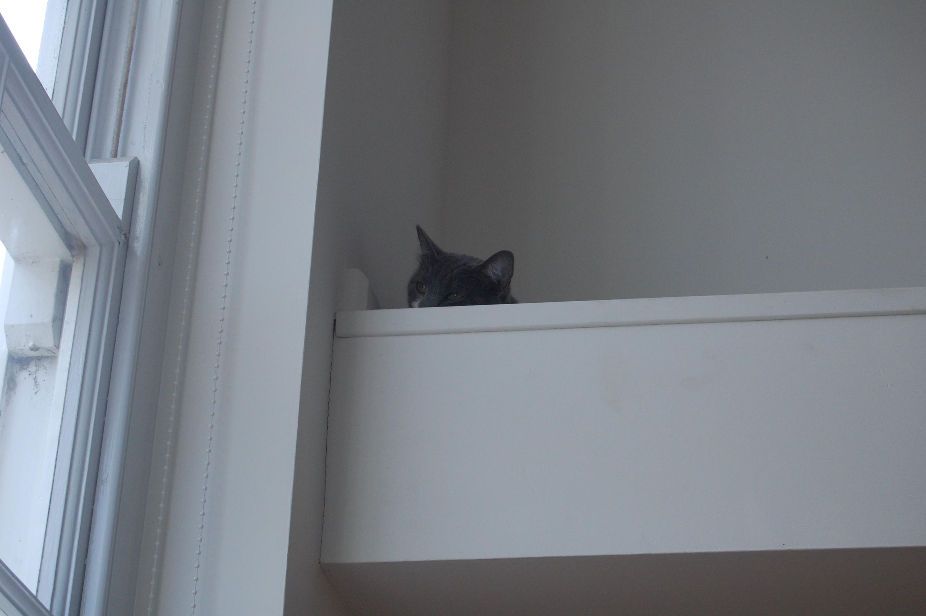 Milo, the sniper