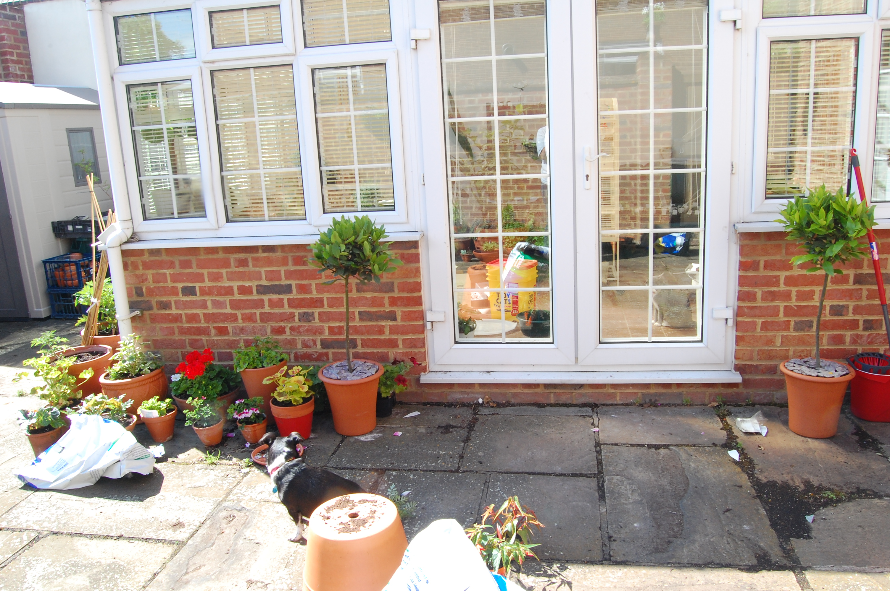 Two bay topiaries frame the conservatory door now
