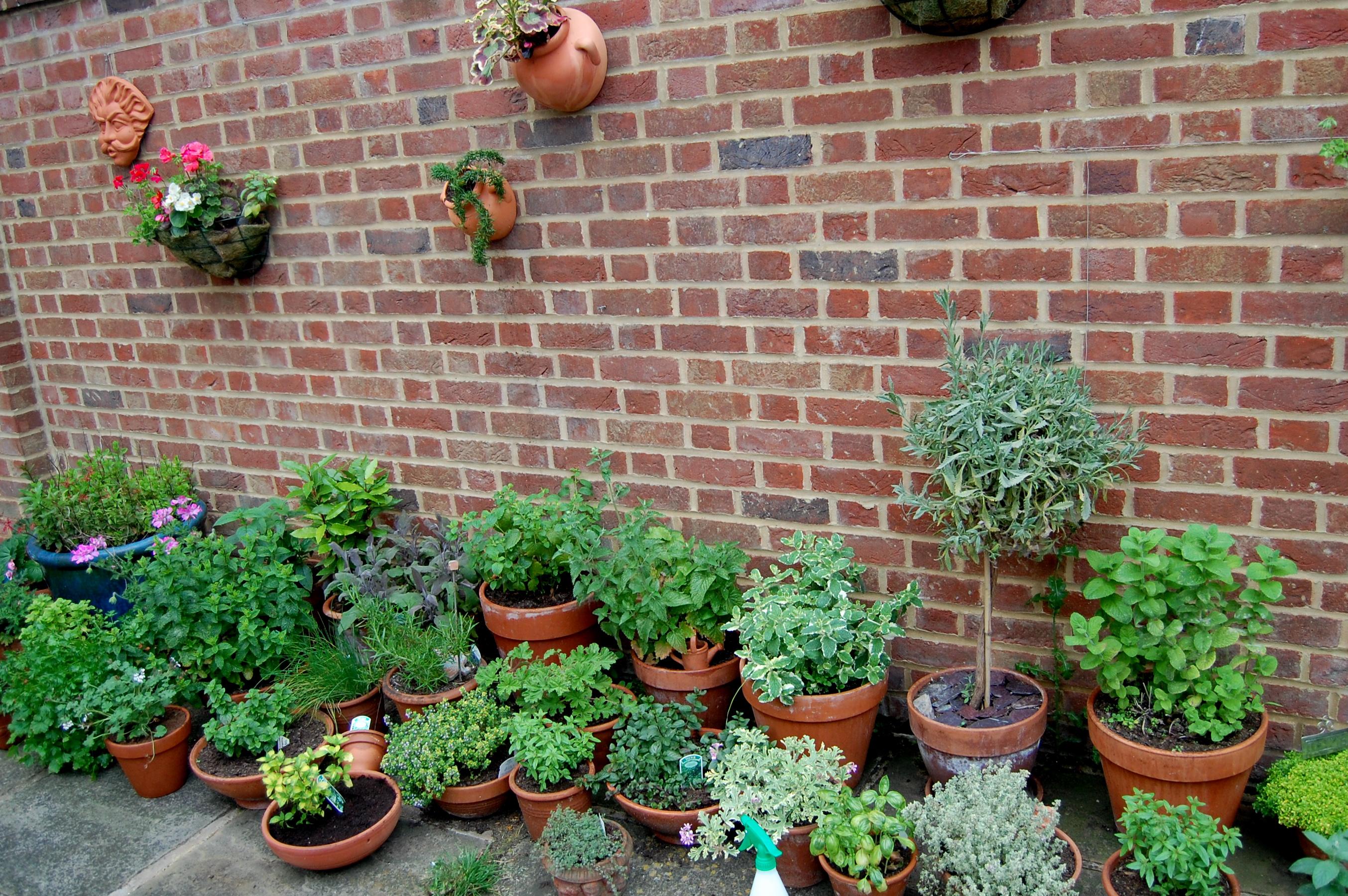 Part of the herb garden