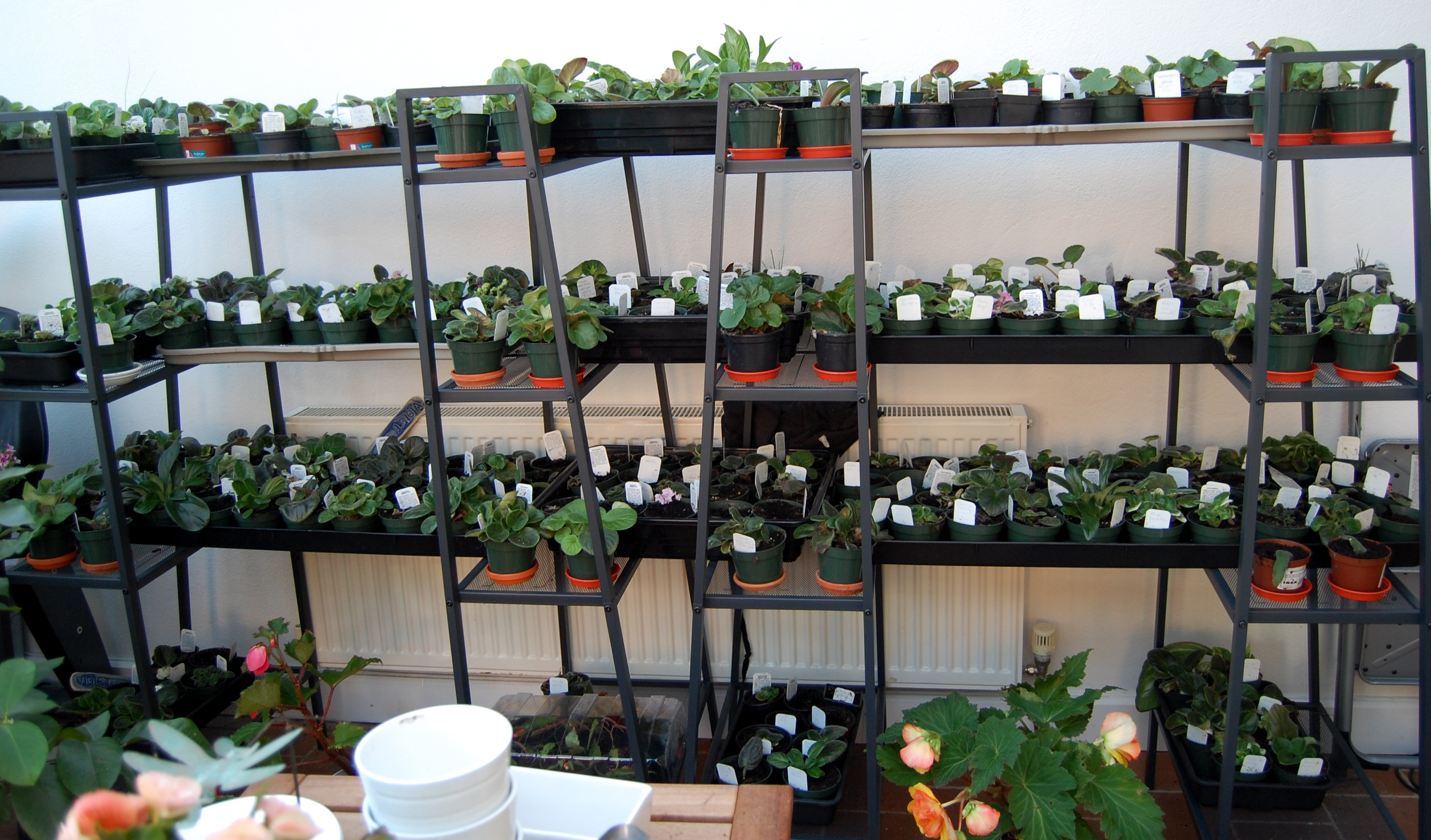For the astute IKEA fans out there these are the cheapy shelves connected by grow-bag trays.
