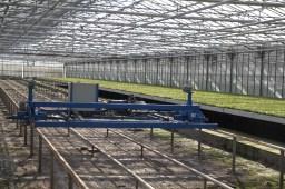 Automation makes for efficient and uniform Azalea production