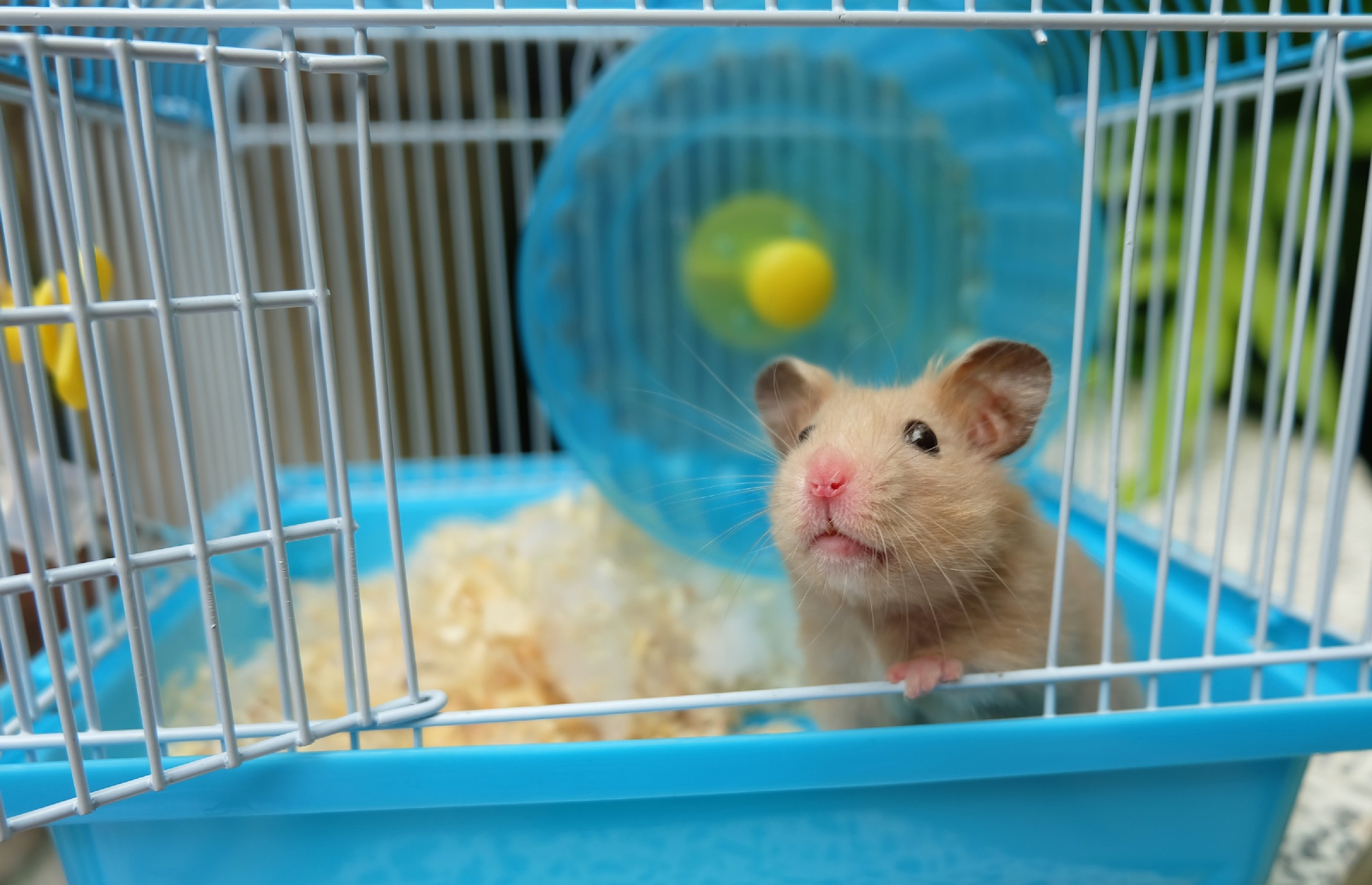 6 things great hamster