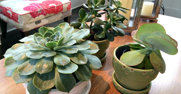 plants in interior design