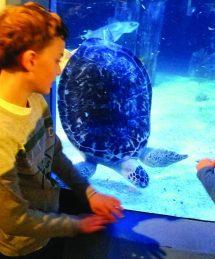 Sea Mystic Aquarium Husky Howl
