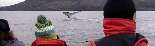 Humpback Whale Watching in the Strait of Magellan Trip