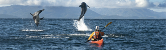 Dolphins Watching Tour by zodiac boats