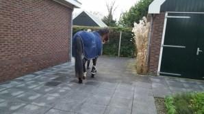hospice-paard-dec-19-.11