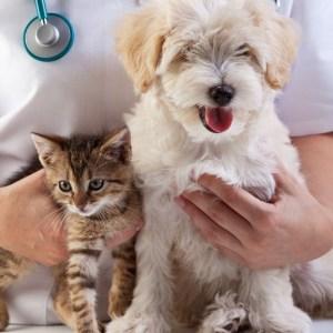 Clínica Médica Geral