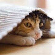 gato_escondido