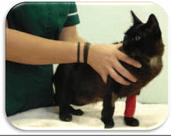 Como dar comprimidos/pastillas a tu gato 1