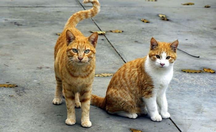 Los gatos callejeros tienen mas posibilidad de contagio