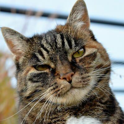 plan de salud gato vip