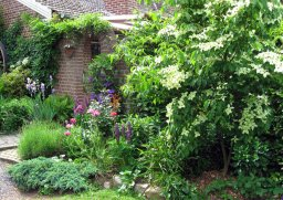 Cornus (with the white flowers)