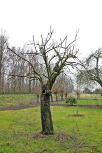 various apple trees