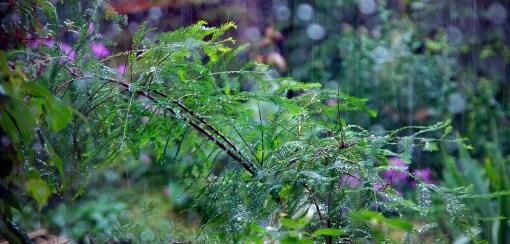 My little Taxodium distichum in its element.
