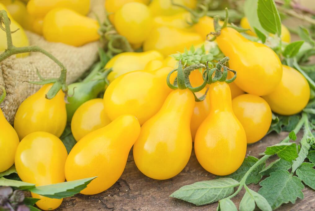 Yellow Pear Tomato | Premium Garden Seeds | Hoss Tools