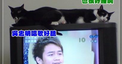 看貓說故事