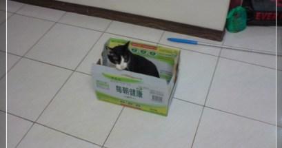 養貓需要幫貓買個窩嗎?