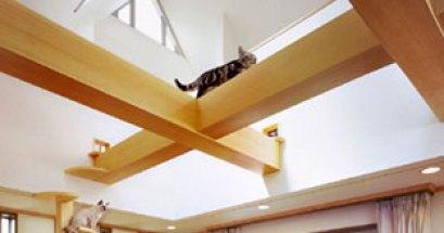 這就是貓的夢想家