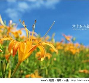 【花蓮】六十石山金針花!終於知道這種金針花海的感受了^^