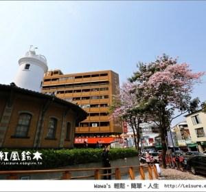 【台南】洋紅風鈴木,氣象局前正在盛開中唷!