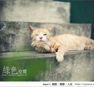 【玉井】虎頭山綠色空間,意外發現這裡有許多貓咪唷!