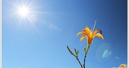 【花蓮】六十石山金針花!二度造訪一樣美麗!