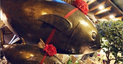 【東港】佳珍海產店,黑鮪魚我來也!