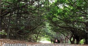 最近有個地方讓我很想去走走,那就是最近稍有知名度的新營長勝營區綠色隧道原本被曝光是因為這裡可能要被都更,綠色隧道可能就此默默消失也因為大家的...