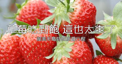 【田原】竟然有草莓吃到飽的行程!お陽様農園30分鐘讓你吃到會害怕啊!