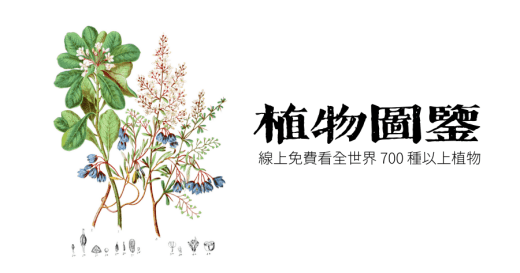 Illustrations of the Natural Orders of Plants(19 世紀植物圖鑑)