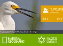 iNaturalist 比形色好用的動植物辨識 App,由國家地理學會、加州科學院共同開發 (iOS/Andorid)