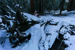 3-31-2016_The_Great_Spring_Break_Road_Trip_of_2016-Death_Valley-Sequoia-Yosemite__DSC2258