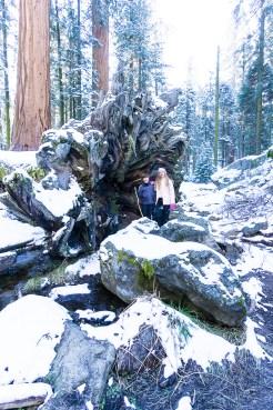 3-31-2016_The_Great_Spring_Break_Road_Trip_of_2016-Death_Valley-Sequoia-Yosemite__DSC2514