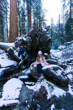 3-31-2016_The_Great_Spring_Break_Road_Trip_of_2016-Death_Valley-Sequoia-Yosemite__DSC2548